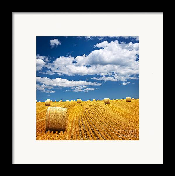 Agriculture Framed Print featuring the photograph Farm Field With Hay Bales by Elena Elisseeva