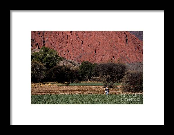 Argentina Framed Print featuring the photograph Farmer In Field In Northern Argentina by James Brunker