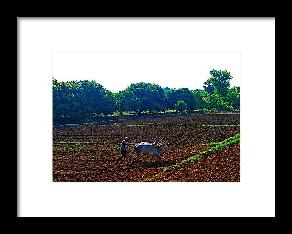 Working Animal Framed Print featuring the photograph Farmer With Cow by Gopan G Nair