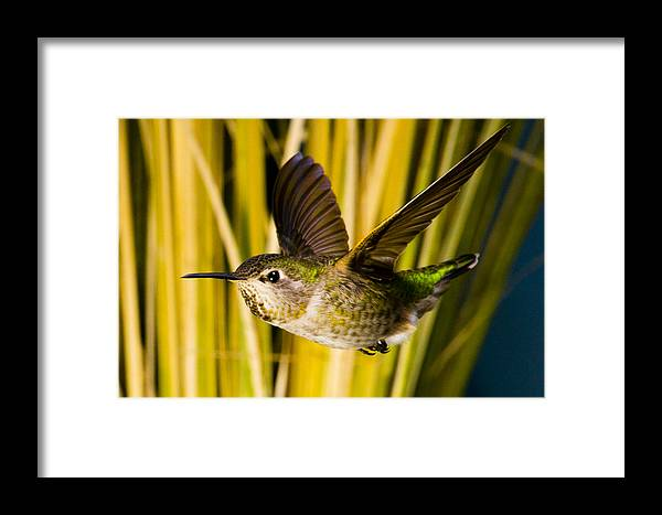 Flying Framed Print featuring the photograph Fastest by Christopher Matthews