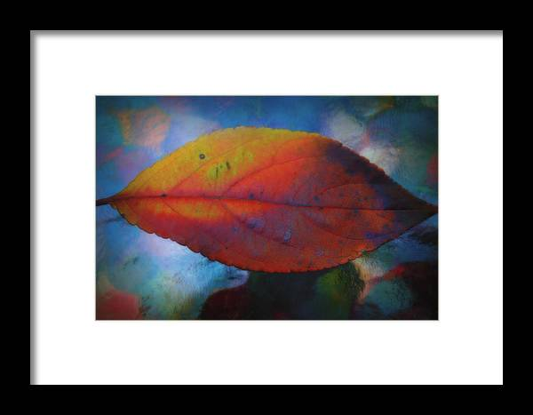 Fauvist Hydrangea Leaf Framed Print featuring the photograph Fauvist Hydrangea Leaf by Beth Akerman