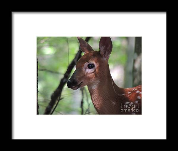Fawn Framed Print featuring the photograph Fawn by Mariah Stone