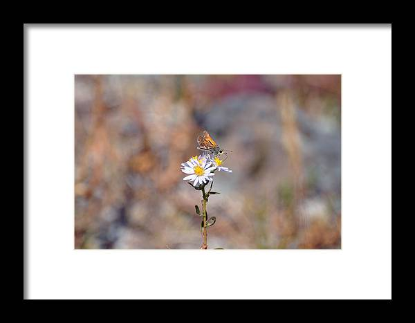 Moth Framed Print featuring the photograph Feasting Moth by Bruce Gourley