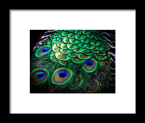 Exotic Birds Framed Print featuring the photograph Feather Abstract by Karen Wiles