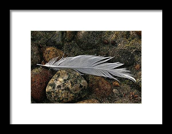 Feather Framed Print featuring the photograph Feather And Rocks by Chuck Purro