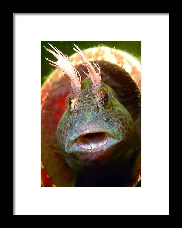 Fish Framed Print featuring the photograph Feather Blenny - A Fish by Paul Ward