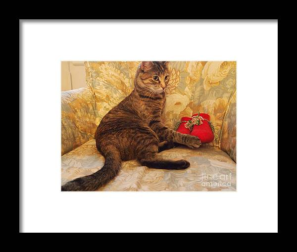 Photography. Cat Photography Framed Print featuring the photograph Feather With Christmas Booties by Nancy Kane Chapman