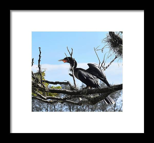 Bird Framed Print featuring the photograph Feathers Of A Bird by Mark Mitchell
