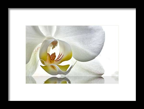 Framed Print featuring the photograph Feeding Love by Marty Straub