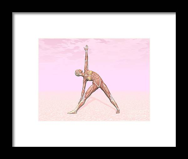 Anatomy Framed Print featuring the digital art Female Musculature Performing Triangle by Elena Duvernay