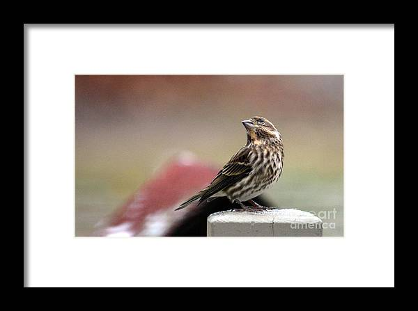 Bird Framed Print featuring the photograph Patiently Waiting by Jaunine Roberts