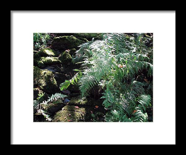 Framed Print featuring the photograph Fern Gully by Matthew Barton