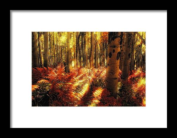 Aspen Trees Framed Print featuring the photograph Ferns On The Forest Floor by Teri Virbickis