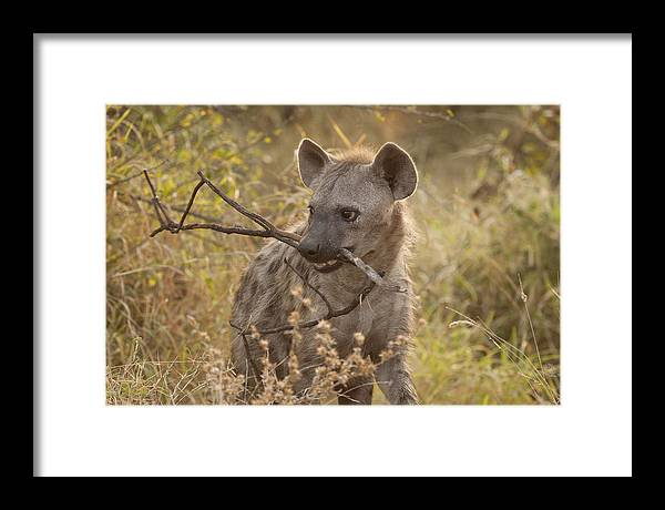 Stick Framed Print featuring the photograph Fetch Boy by David Pryce