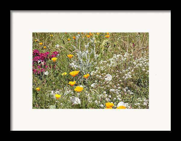 Flowers Framed Print featuring the photograph Field Of Flowers by Artist and Photographer Laura Wrede