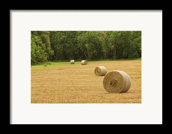 Hay Framed Print featuring the photograph Field Of Freshly Baled Round Hay Bales by James BO Insogna