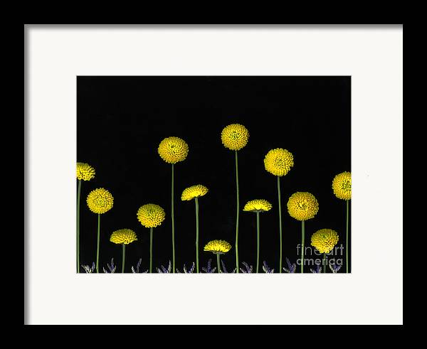 Scanography Framed Print featuring the photograph Field Of Gold by Christian Slanec