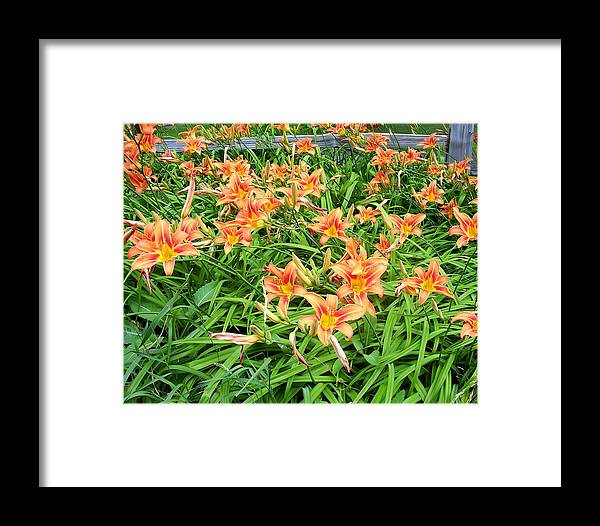 Flower Framed Print featuring the photograph Field Of Tiger Lilies by Aimee L Maher ALM GALLERY