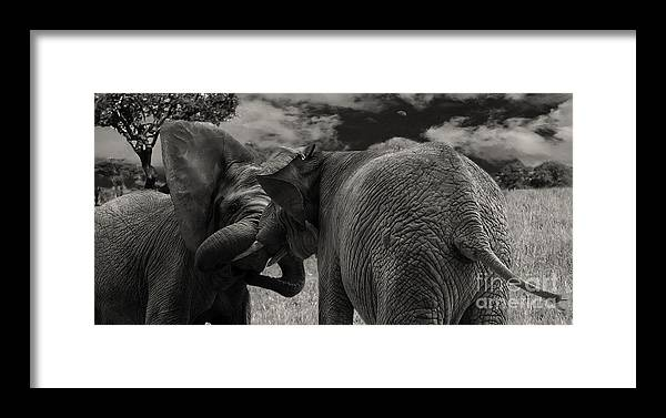 Elephants Framed Print featuring the photograph Fiighting Elephants by Christine Sponchia