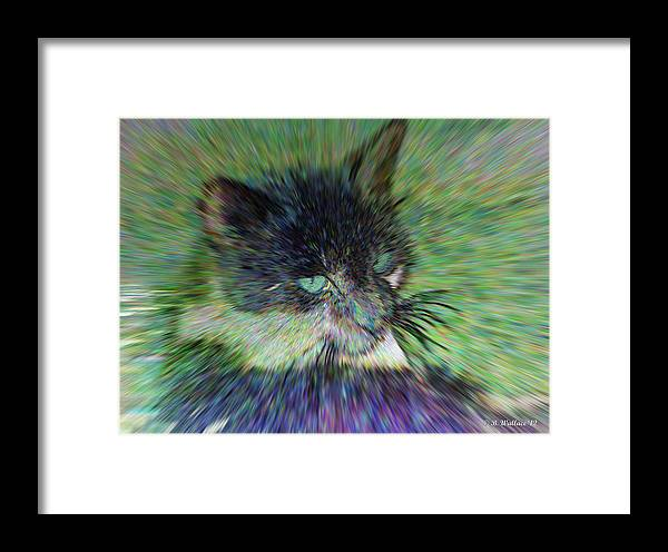 2d Framed Print featuring the photograph Filtered Cat by Brian Wallace