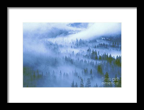 North America Framed Print featuring the photograph Fir Trees Shrouded In Fog In Yosemite Valley by Dave Welling