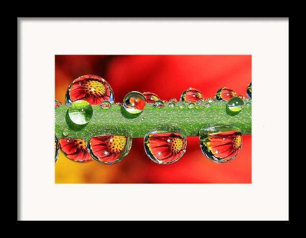 Water Drops Framed Print featuring the photograph Firey Drops by Gary Yost