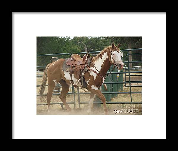 Horse Framed Print featuring the photograph First Saddle by Kris Wolf
