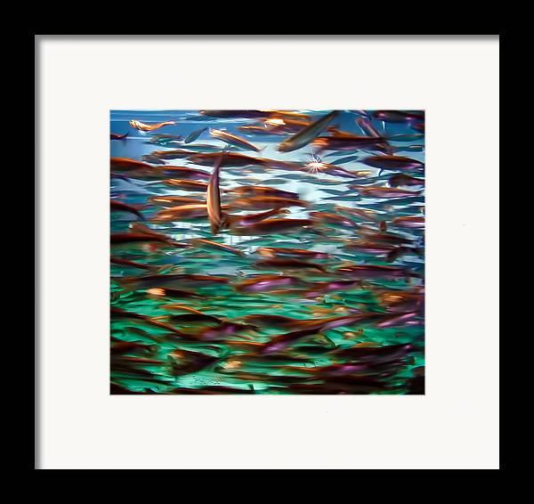 Fish Framed Print featuring the photograph Fish 1 by Dawn Eshelman