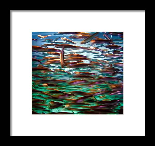 Fish Framed Print featuring the photograph Fish 1 by Dawn Eshelman