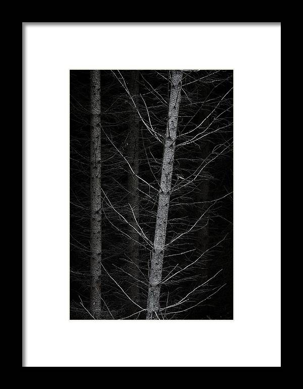 Fish Bone Framed Print featuring the photograph Fish Bone by Odd Jeppesen