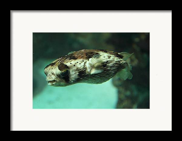 Inner Framed Print featuring the photograph Fish - National Aquarium In Baltimore Md - 1212136 by DC Photographer