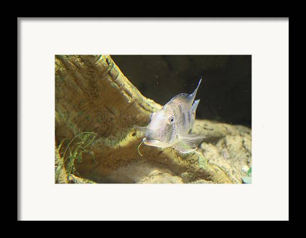 Inner Framed Print featuring the photograph Fish - National Aquarium In Baltimore Md - 121248 by DC Photographer