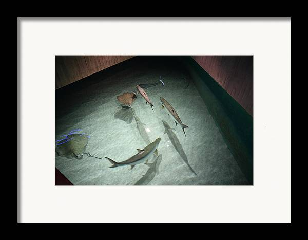Inner Framed Print featuring the photograph Fish - National Aquarium In Baltimore Md - 121283 by DC Photographer