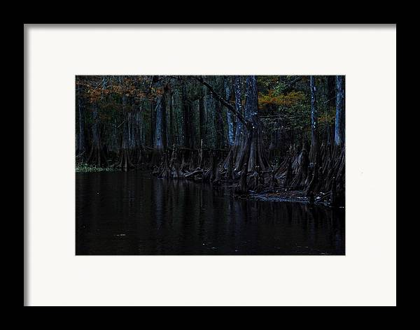 Fisheating Creek Framed Print featuring the photograph Fisheating Creek 28 by Carol Kay
