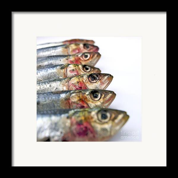 Animal Body Part Framed Print featuring the photograph Fishes by Bernard Jaubert