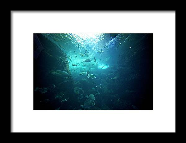 Underwater Framed Print featuring the photograph Fishes by By Tddch