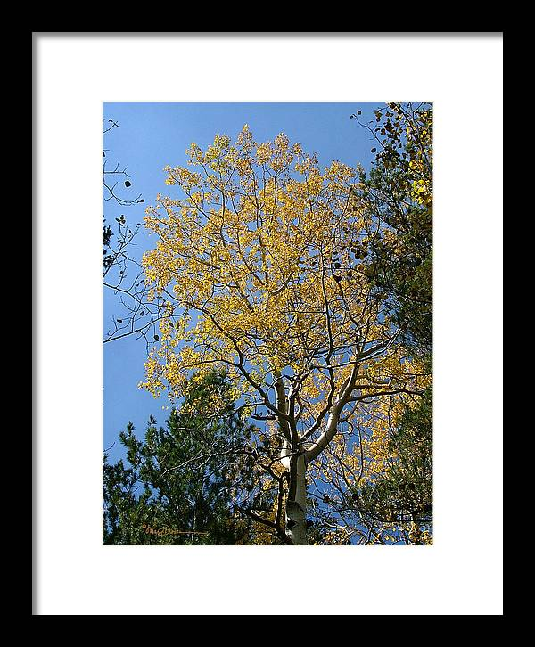 Mary Dove Art Framed Print featuring the photograph Flagstaff Aspens 784 by Mary Dove