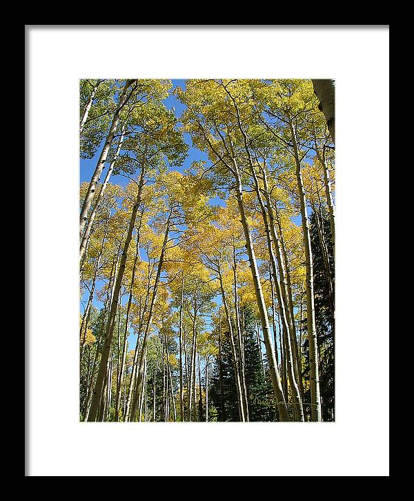 Mary Dove Art Framed Print featuring the photograph Flagstaff Aspens 794 by Mary Dove