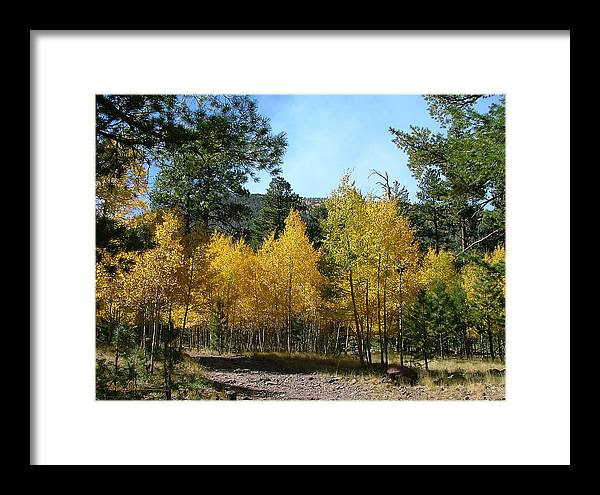Mary Dove Art Framed Print featuring the photograph Flagstaff Aspens 804 by Mary Dove