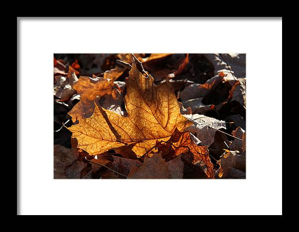 Maple Framed Print featuring the photograph Flaming Leaves by Doris Potter