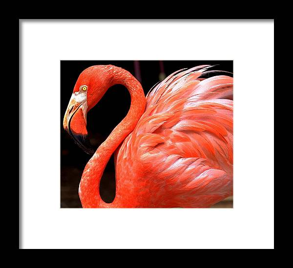 Flamingo Framed Print featuring the digital art Flamingo by Carrie OBrien Sibley