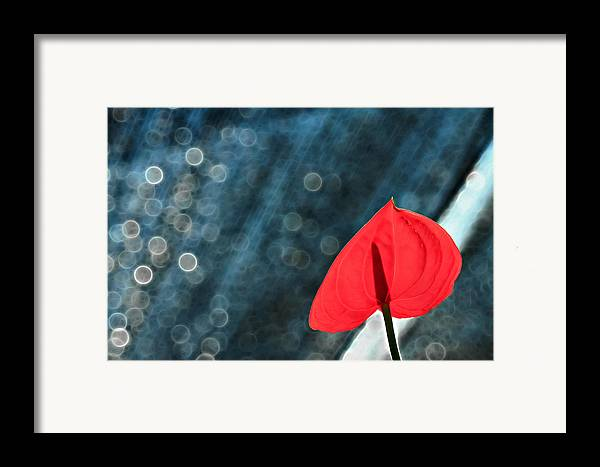 Flamingo Framed Print featuring the photograph Flamingo In Love by Suradej Chuephanich
