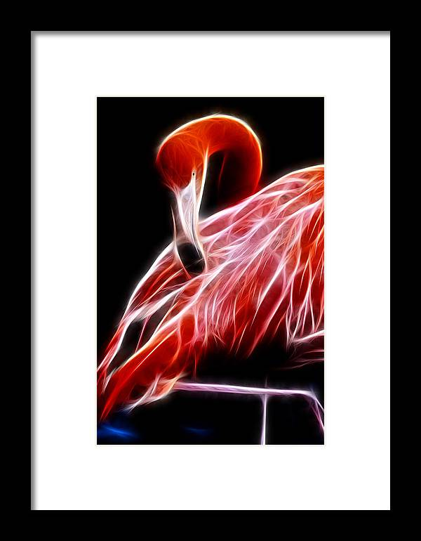 Fractal Framed Print featuring the photograph Flamingo Portrait Fractal by Pati Photography