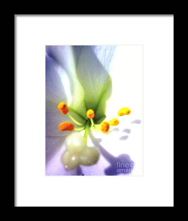 Lily Framed Print featuring the photograph Fleur-de-lis by Linda Wild