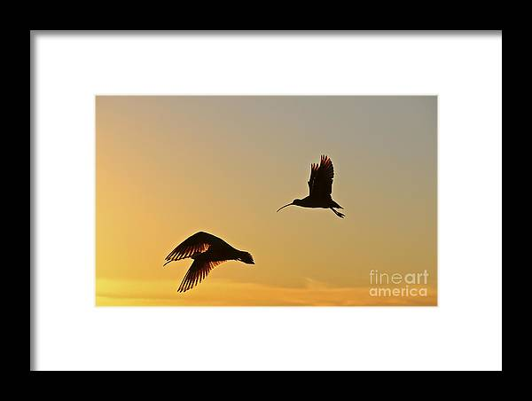 Curlews Framed Print featuring the digital art Flight Of The Curlews by Heidi Peschel