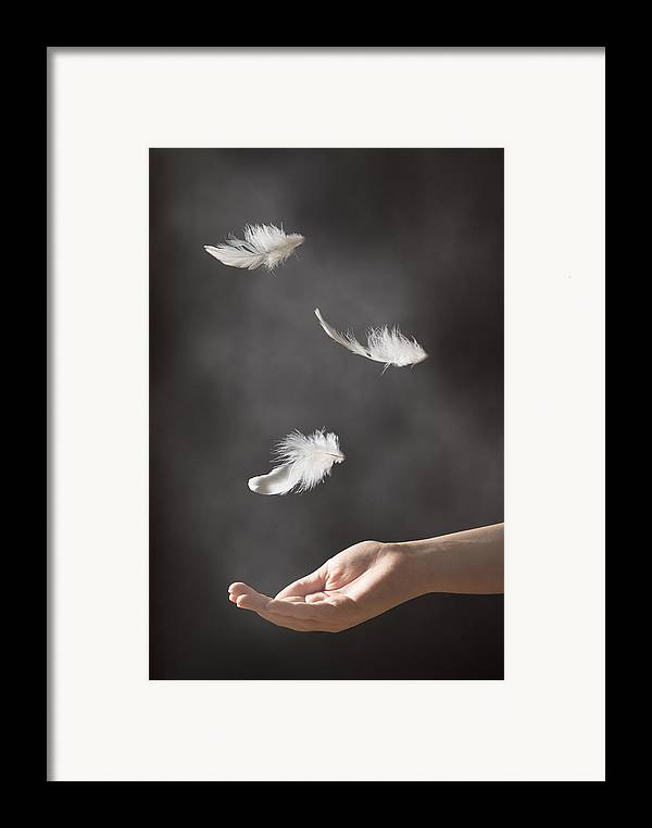 Floating Framed Print featuring the photograph Floating Feathers by Amanda Elwell