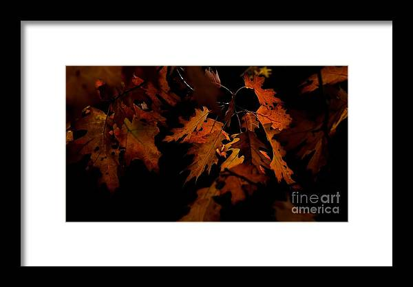 Julie Clements Framed Print featuring the photograph Floating Golden Highlights by Julie Clements