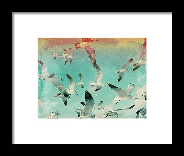 Animal Themes Framed Print featuring the photograph Flock Of Seagulls, Miami Beach by Michael Sugrue