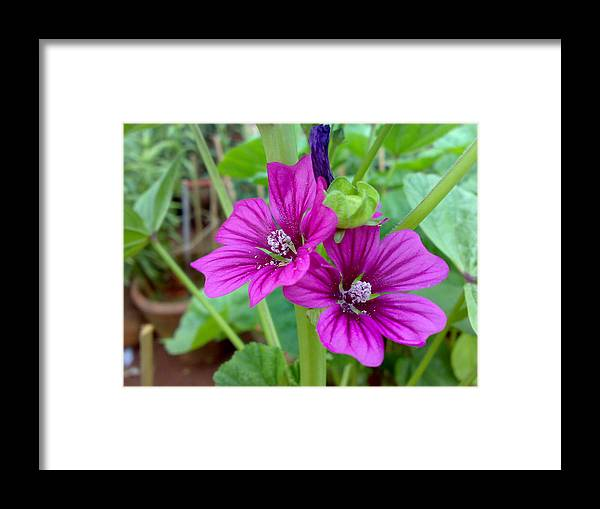 Flowers Framed Print featuring the digital art Flora by Syed Suhaib Pasha