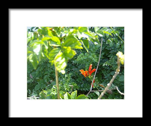 Flowers Framed Print featuring the photograph Floral 2 by Dan Twyman